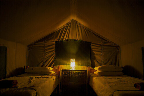 Interior of tent lodge with two beds set up at night during a safari in Maun Botswana