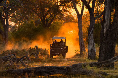 Tourists looking at impala herd on evening game drive in the Moremi Game Reserve, national park in northern Botswana