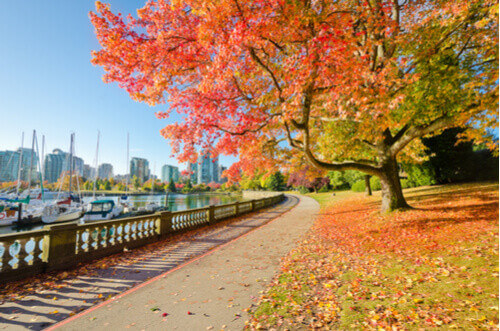 Stanley Park Seawall in Autumn