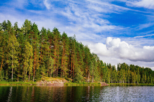 Wooden log cabin at the lake in a dense forest during summer in Finland
