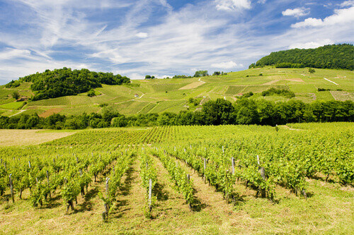 Vineyards near Chateau Chalon in Departement Jura Franche Comte France