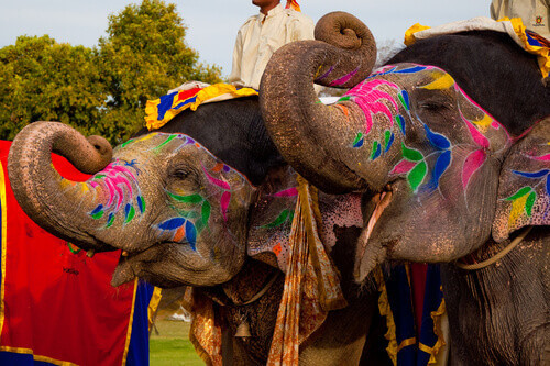 Two painted elephants posing at the Elephant festival in Jaipur India