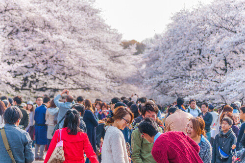 A crowd enjoying the cherry blossoms festival in Ueno Park, Tokyo, Japan.