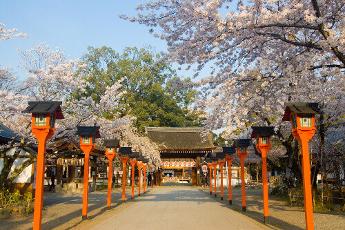 Spring Cherry blossoms in Hirano Shrine in Kyoto Japan