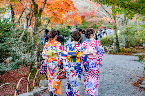 """Kimono wearing tourists in Sogenchi pond garden at Tenryuji temple, located in the scenic Saga Arashiyama area in Kyoto, Japan"""