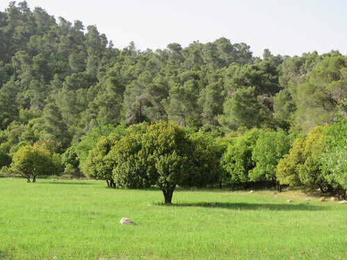 A greenfield around Dibeen Forest Reserve in Jerash Jordan
