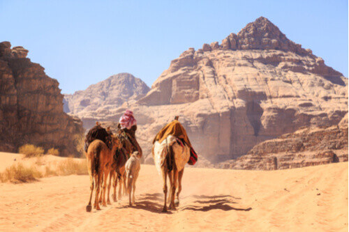 Bedouins riding camels desert jordan