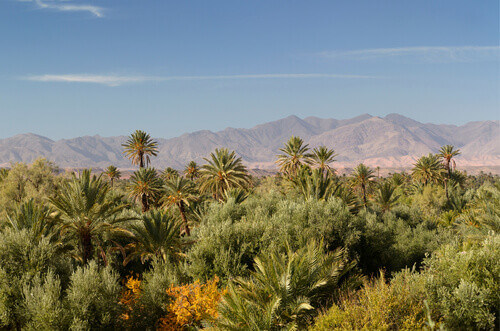 View of High Atlas mountains and the Skoura Palm Grove from Kasbah Ben Moro Morocco
