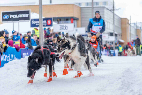 Finnmarkslopet longest dog sledding race in Alta Norway