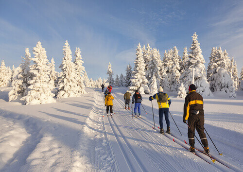 A group of cross country skiers on a sunny winter morning in Norway
