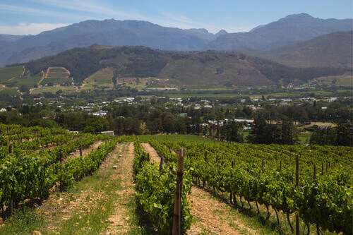 Winery outside Franschhoek in Western Cape Cape Town South Africa
