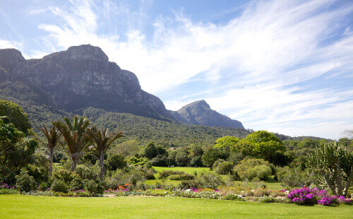 A view of Kirstenbosch National Botanical Garden in Cape Town South Africa