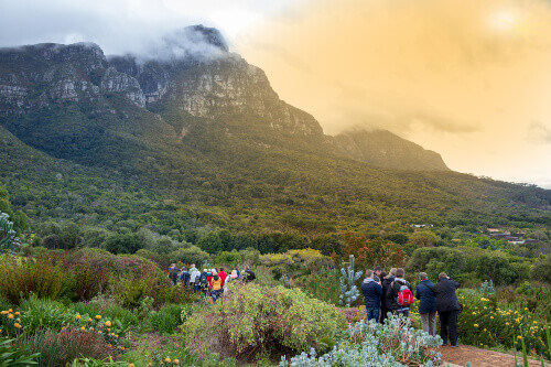 Kirstenbosch Botanical Garden in Cape Town South Africa is one of the most beautiful botanical gardens in the world