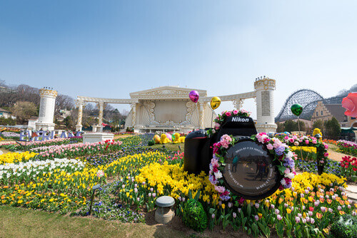 Colorful Tulip Festival at Everland Theme Park in Yongin South Korea