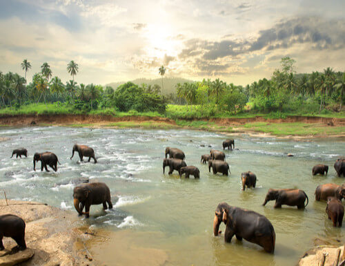 elephants in watering hole sri lanka