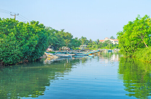 """""""The quiet harbour with fishing canoes, moored at the shore, covered with lush greenery in Negombo lagoon in Sri Lanka"""""""