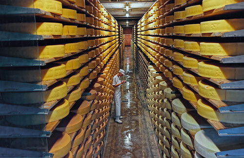 Row upon row of cheese left to mature in a cellar of Maison du Gruyere cheese dairy in Gruyere Switzerland
