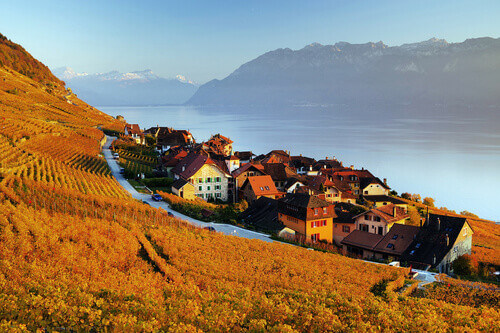 Vineyard terraces in the famous Lavaux wine region overlooking the northern shores of Lake Geneva in Switzerland