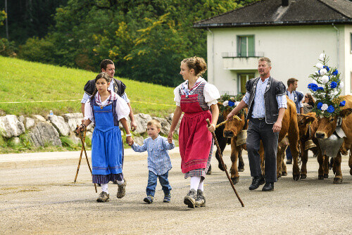 Cows wore costume with men wearing Bredzon and Dzaquillon for women at the annual Désalpe de Charmey in Switzerland
