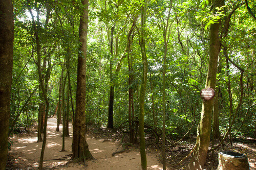 Cu Chi tunnels in Ho Chi Minh city Vietnam