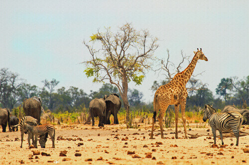 View of Hwange National Park in Zimbabwe South Africa