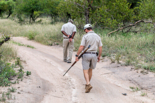 Animal trackers and African anti poaching safari in Zimbabwe