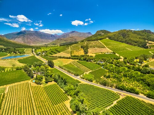 Stellenbosch vineyards, South Africa