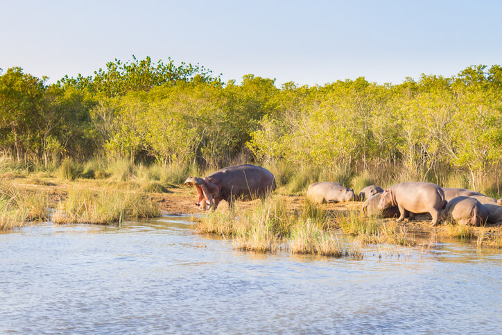Isimangaliso Wetland Park, South Africa