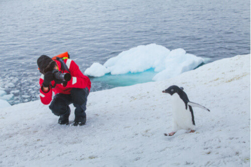 person photographing penguin antarctica