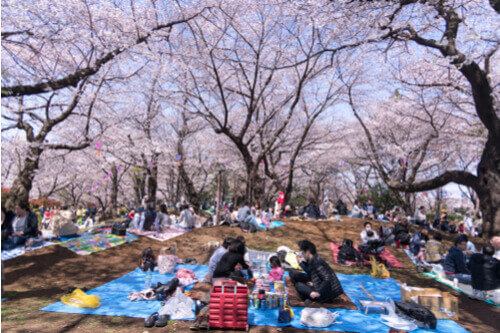 Hanami flower viewing party Japan