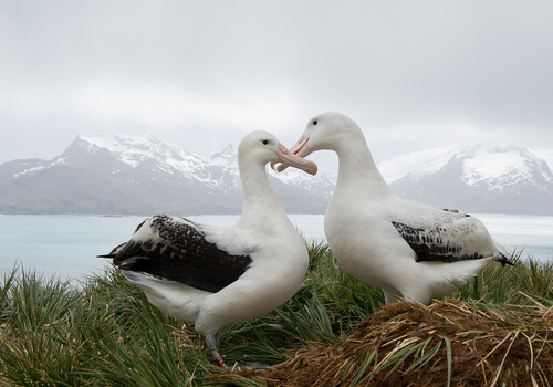 two albatrosses on grass