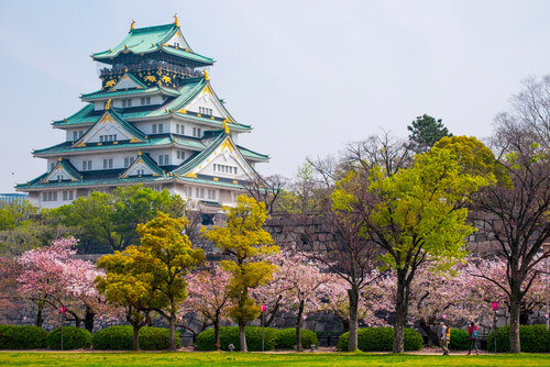 osaka castle cherry blossoms japan