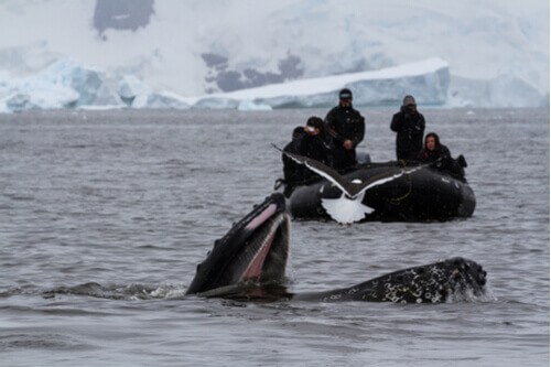People on zodiac whale watching antarctica